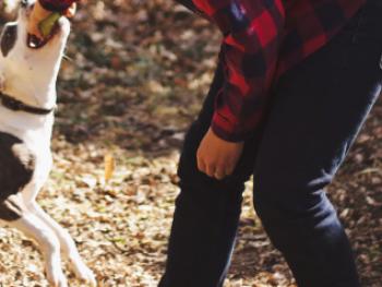 Hond-is-druk