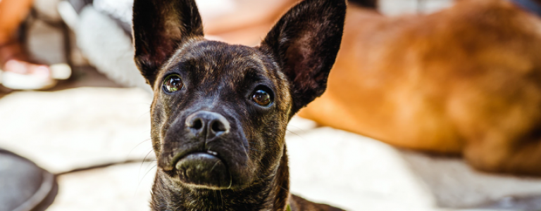 Verlatingsangst-hond
